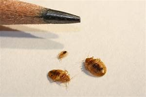 arizona pest management center With bed bugs arizona