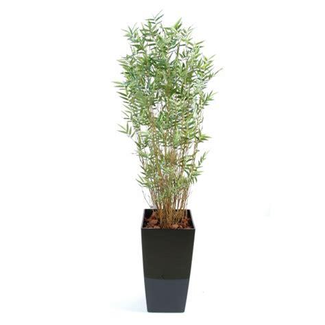 bambou multitree en kubis composition