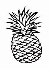 Pineapple Coloring Outline Drawing Hawaiian Clipart Adult Smooth Cartoon Pages Cliparts Clip Fruit Sheet Cayenne Delicious Characters Drawings Clipartmag sketch template