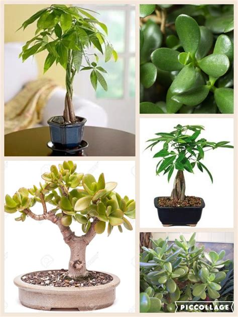 plants for the bathroom feng shui 25 best ideas about money tree locations on