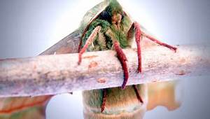 Larve Mite Alimentaire : anti papillon et anti larve 10 trucs efficaces 10 trucs ~ Nature-et-papiers.com Idées de Décoration