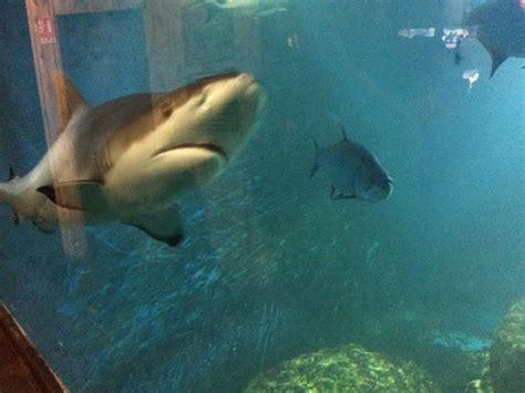 aquarium d amneville photo de aquarium d amneville