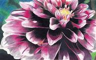 Colored Pencil Flower Drawings