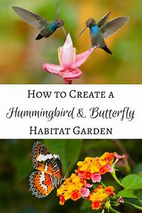 Tips for Creating a Hummingbird and Butterfly Habitat