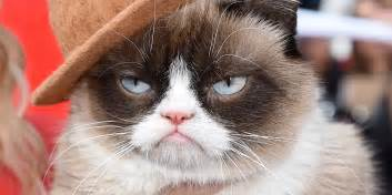 what of cat is grumpy cat grumpy cat pictures breed personality history