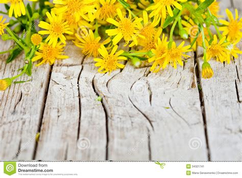 yellow flowers closeup  rustic wooden background stock