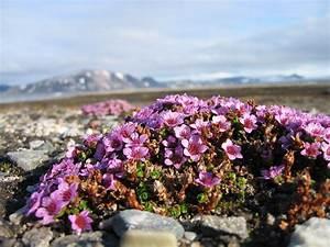 Facts On Tundra Plants Sciencesummit
