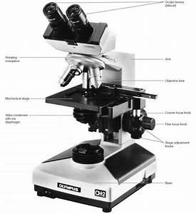 Compound Light Microscope Diagram Worksheet