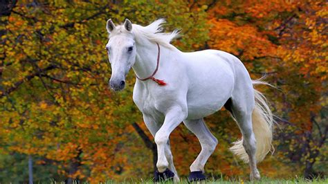 horse resolution