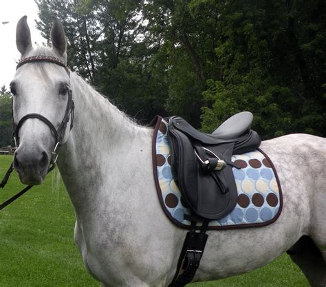 saddle horse pad tack english horses pads western cute saddles dressage equestrian bad ride gorgeous pony grey riding pretty dot