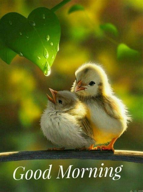 pin  santosh patil  morning beautiful birds pet