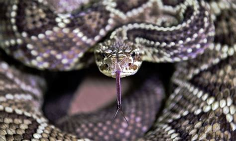 snake quickly attacks glass  dizzying creepy video