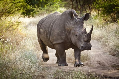 Five Of The Most Endangered African Animals To Spot On