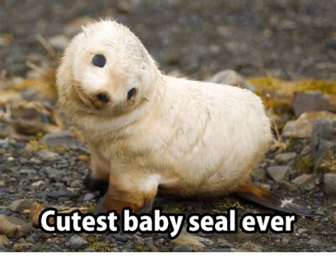 Baby Seal Meme - funny seal memes of 2017 on sizzle cen