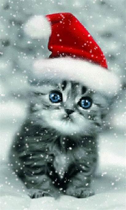 Christmas Cat Winter Kitten Cats Screensavers Kittens