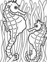 Seaweed Coloring Seahorse Kelp Outline Catch Hang Templates Onto Colouring Printable Seahorses Kidsplaycolor Fish Ocean Cliparts Painting Play Draw Getcolorings sketch template
