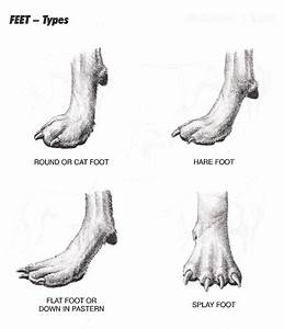 Canpropetstylists Ca  Pictures  Feet Jpg