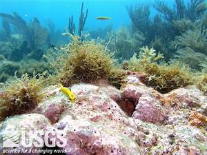 Coastal and Marine Ecosystem Science - USGS Coastal and ...