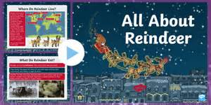 * New * A Christmas Collar Ks1 All About Reindeer Powerpoint Originals