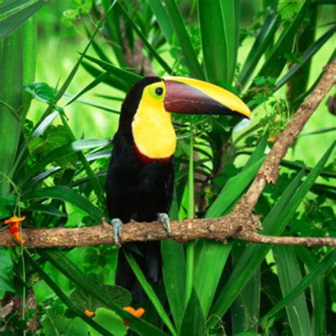 Adaptations of Animals in the Tropical Rain Forest Sciencing