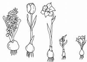 Aufbau Einer Blume : fr hling unterricht grundschule materialien zum unterricht ~ Whattoseeinmadrid.com Haus und Dekorationen