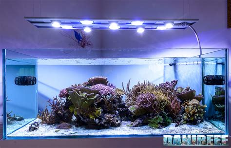 test acquario marino la plafoniera ceab aqua led nell acquario di jonathan betti