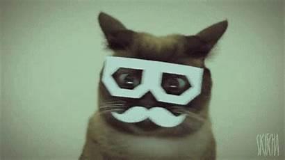 Nope Cat Halloween Funny Costumes Pet Happy