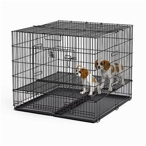 rules   jungle socializing   puppy playpen