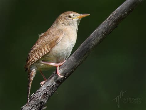 south glenmore park archives birds calgary