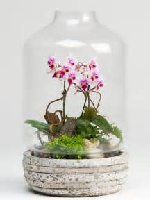 wedding decor rental orchid terrarium plants robertson 39 s flowers