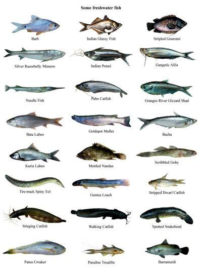 fish banglapedia