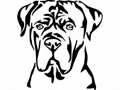 Cane Corso Dog Clip Mastiff Italian Svg