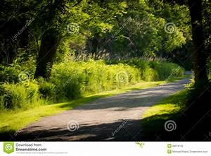Spring Forest stock image. Image of beautiful, green ...