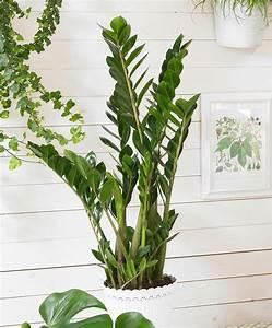 Plante D Intérieur Haute : 10 plantes d int rieur faciles d 39 entretien et quasi intuables ~ Premium-room.com Idées de Décoration