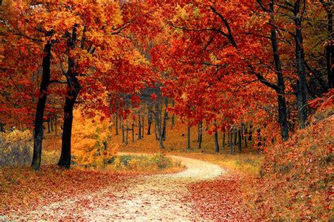 autumn falling leaves hd wallpaper nature