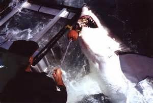 Bondi Shark Bite May Be Hoax