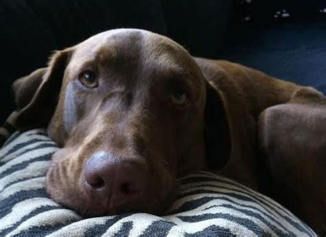 uti infections dogs symptoms   prevent