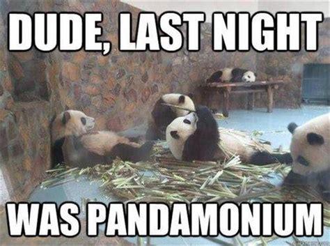 Funny Meme Captions - 30 funny animal captions part 13 30 pics amazing creatures