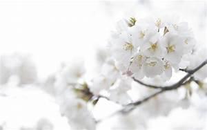 White Flowers Tumblr 31 Background - HdFlowerWallpaper.com