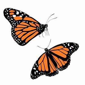 Clipart - Monarch butterflies