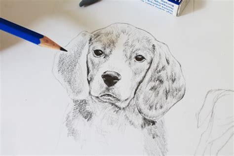 realistic dog drawing tutorial