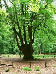 Was Kostet Baum Fällen : kreis dithmarschen bauakte online ~ Orissabook.com Haus und Dekorationen