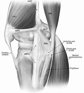 Knee Anatomy Ligaments And Tendons