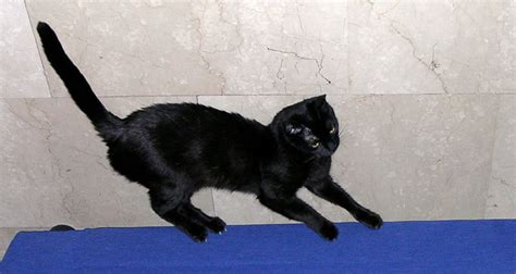 Stop Cat From Scratching Furniture by How To Stop Cats From Scratching Furniture Cat On The Web