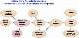 Diagram Of Proposed Transition From Healthy To Aneuploidy