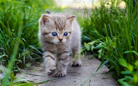 Cool Baby Animal Wallpapers Cute Baby Kittens Wallpaper 2560x1600 45951