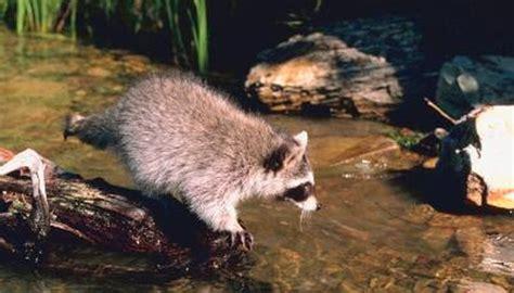 common wild animal   illinois animals momme