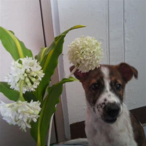 ดอกไม้ ดินญี่ปุ่น อ.ชัย chai clay flower - 🌻กล้วยไม้ซิมบิเ ...