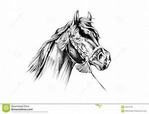 Dessin Fait Main : art de croquis de dessin de cheval fait main illustration stock image 54074724 ~ Dallasstarsshop.com Idées de Décoration