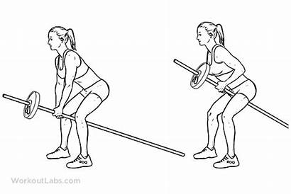 Row Barbell Bent Bar Arm Rows Exercise